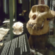 Kielikuvitus museonäyttelyt